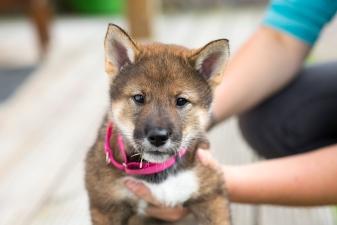 Yuna's puppyhood