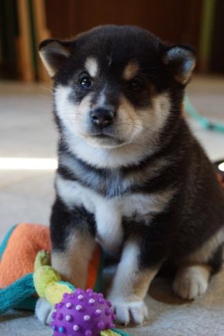 Yuki's puppyhood